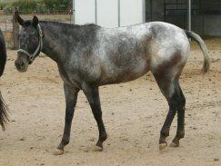 criniera-coda-4