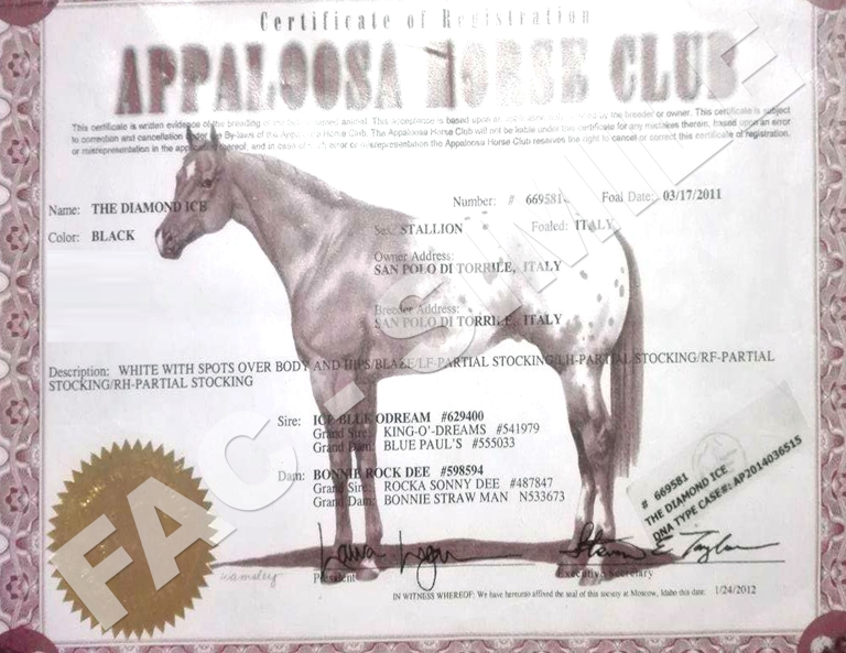 Diamond-ice-Stallone-Appaloosa-certificato