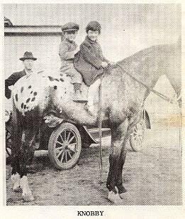 Knobby-foaled-1918-toby-I-great-gran-sire