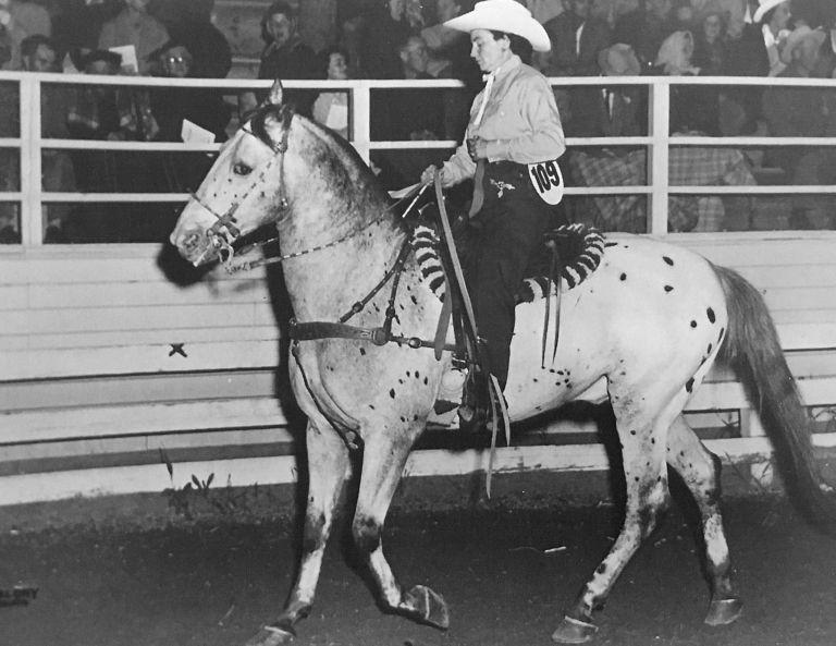 Toby I appaloosa rodeo