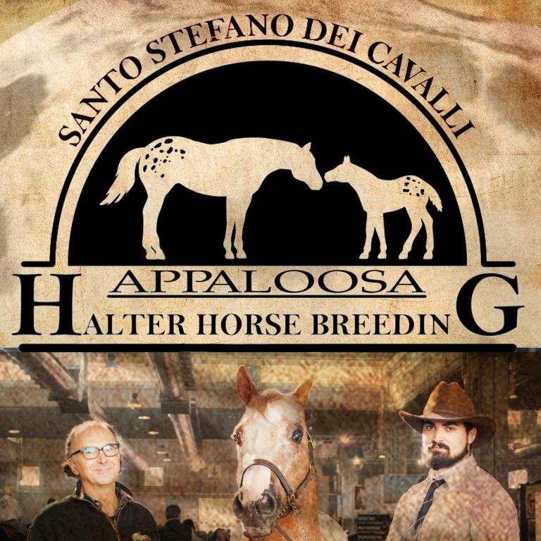 copertina-allevamento-appaloosa-santo-stefano-dei-cavalli