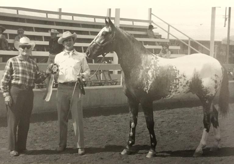 Mister Blue, stallone del 1958 figlio di American Eagle