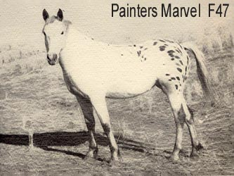 PAINTERS MARVEL fattrice appaloosa