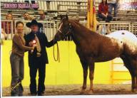 show stallone appaloosa captain macho
