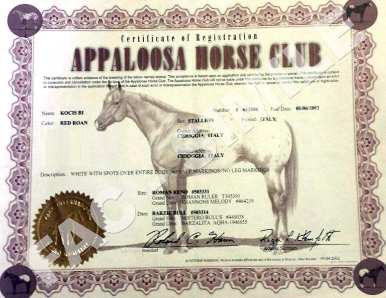stallone-appaloosa-Kocis-certificato