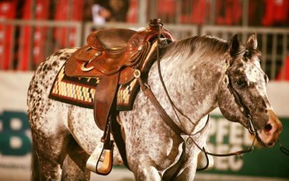 BOEMIL TWIN ROBOTOP stallone appaloosa reining 2