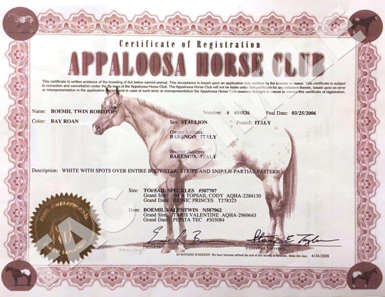 BOEMIL-TWIN-ROBOTOP-stallone-appaloosa-reining-certificato