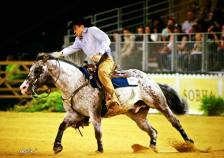 BOEMIL TWIN ROBOTOP stallone appaloosa reining NRHA
