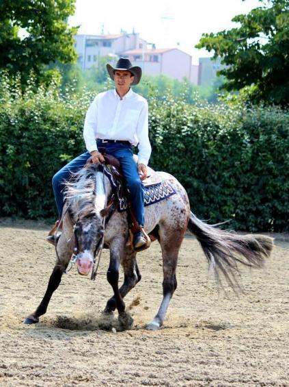 BOEMIL TWIN ROBOTOP stallone appaloosa reining spin