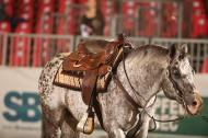 BOEMIL TWIN ROBOTOP stallone appaloosa reining