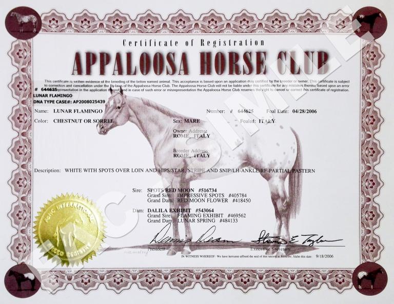 Fattrice-appaloosa-Lunar-Flamingo---certificato.jpg