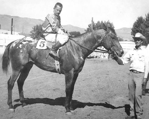 Stallone appaloosa Apache King vinse 28 delle 36 corse