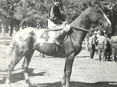 Stallone appaloosa Apache legendario cavallo da corsa