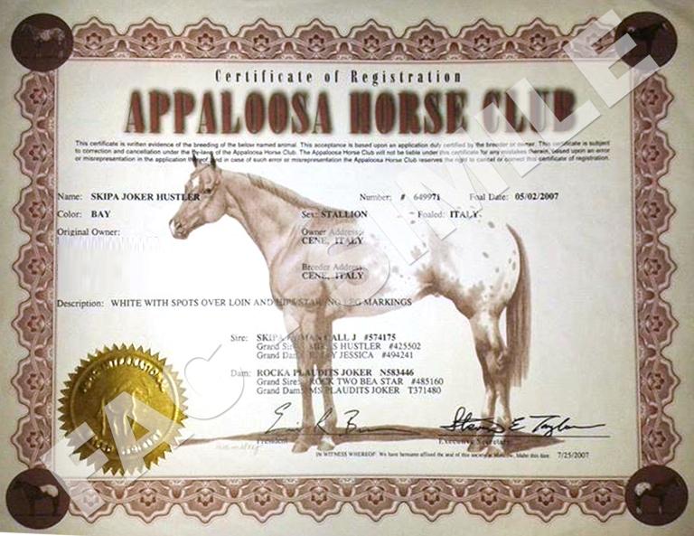Stallone-Appaloosa-Skipa-Joker-Hustler-certificato