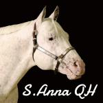 allevamento-appaloosa-sant-anna-QH-brave-heart-copertina-allevamento