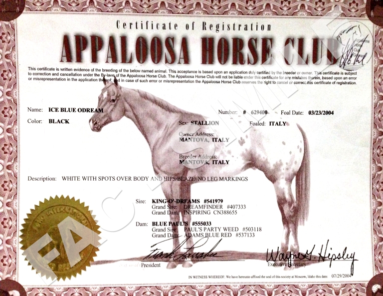 Certificato-Stallone-Appaloosa-Ice-Blue-O'Dream