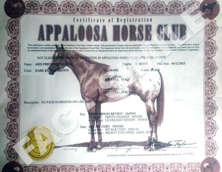 Cavalla-Appaloosa-Aris-Phenomenal-Tess-certificato.JPG