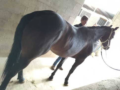 Cavalla Appaloosa Aris Phenomenal Tess scuderia