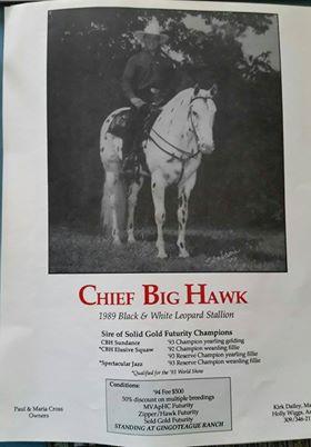 chiefbighawk