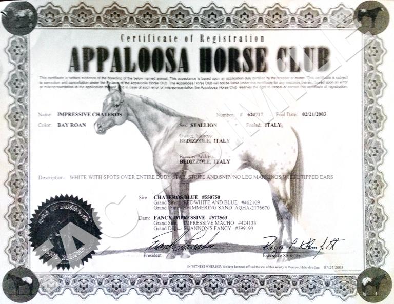 stallone-appaloosa-Impressive-Chateros-certificato.jpg