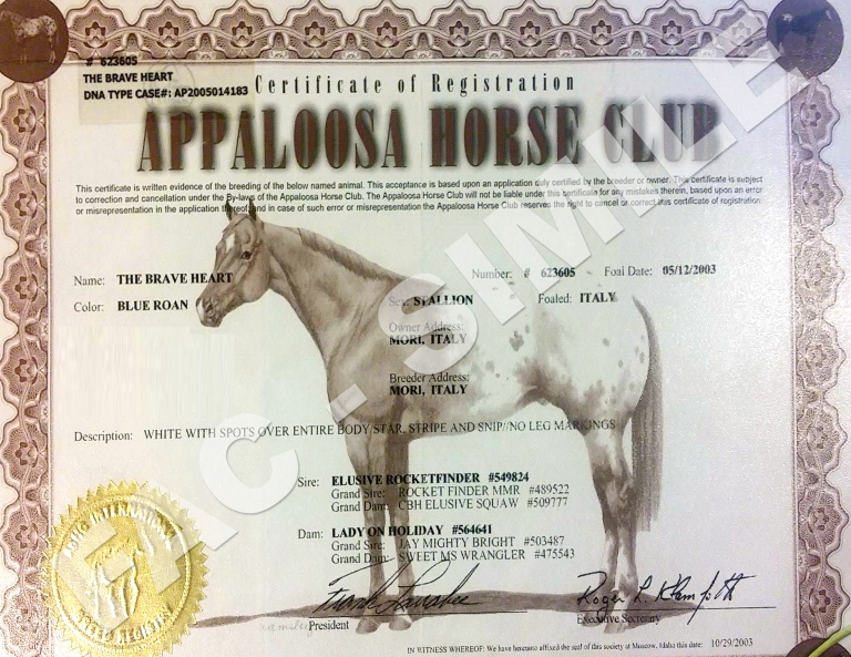 stallone-appaloosa-the-brave-heart-certificato.jpg