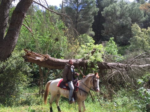 Stallone appaloosa Pl Andrews Figment trekking