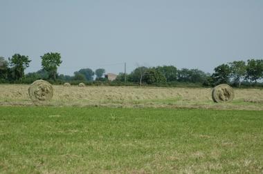 allevamento appaloosa blue ranch fieno