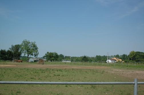 allevamento appaloosa blue ranch paddok