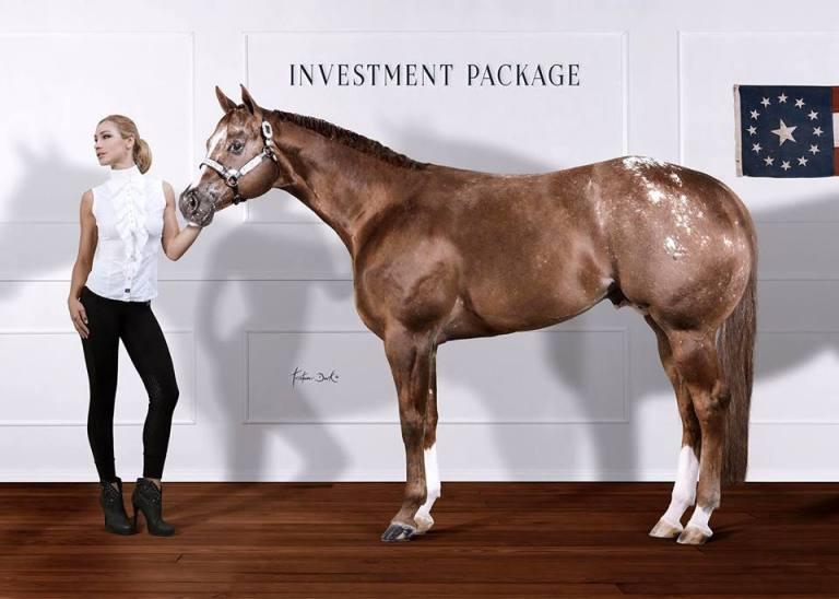investment-package-stallone-appaloosa-campione-del-mondo-pubblicita