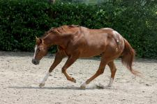investment-package-stallone-appaloosa