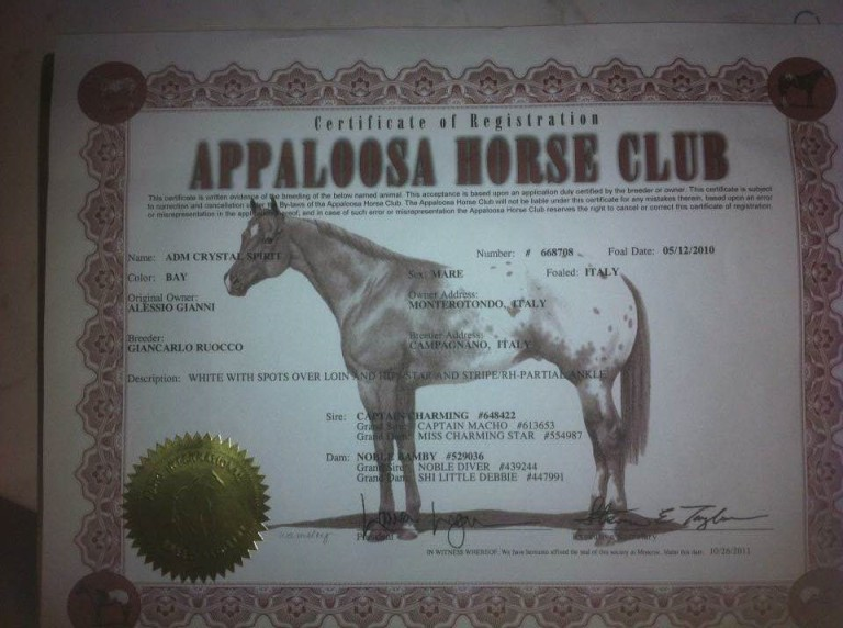 adm_cristal_spirit_fattrice_appaloosa_certificato