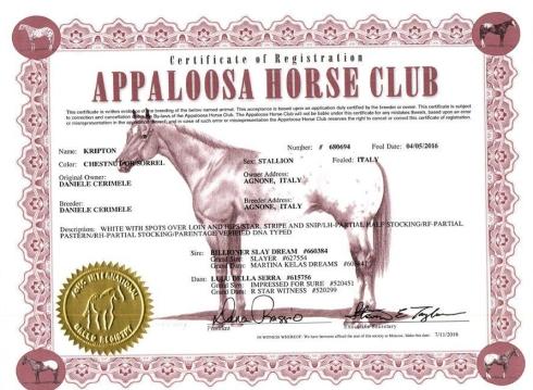 kripton_puledro_appaloosa_certificato