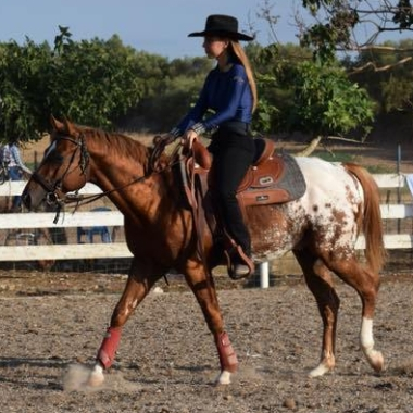 atechnicolordream-ra-appaloosa-colt-cover-saddled