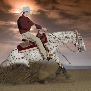 stallone-appaloosa-reining-topsail-speckles-stop