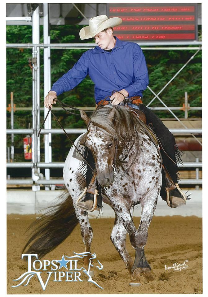 TOPSAIL-VIPER-Appaloosa-Stallion-Reining-Champion-Spin