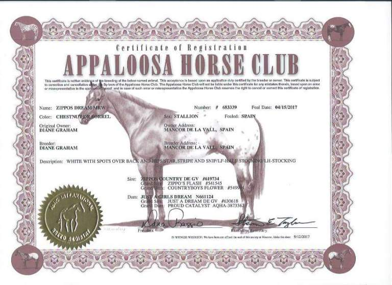 zippos-dream-mrw-appaloosa-colt-8