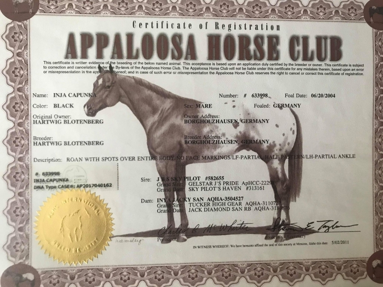 performance-appaloosa-mare-inja-capunka-certificate-.jpg