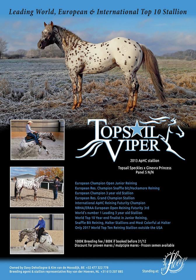 TOPSAIL-VIPER-Appaloosa-Stallion-Reining-Champion-Locandijna