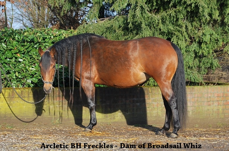 dam of Broadsail Whiz